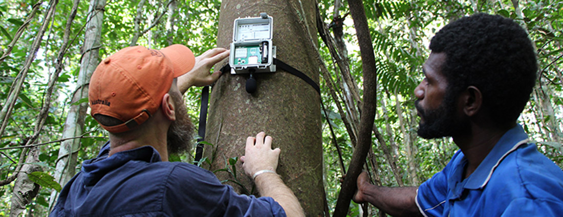 A bioacoustic data recorder is mounted on a tree in Papua New Guinea. (Photo credit: Justine Hausheer, The Nature Conservancy)